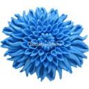 First Impressions Chrysanthemum